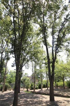 Imágenes del Parque del Meridiano de Castellón
