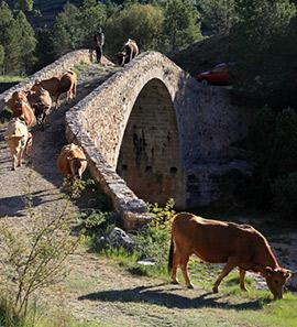 Testigos directos de la trashumancia de Fernando Robres de Castellón