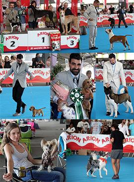 Exposición canina en Castellón