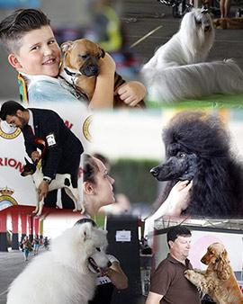 Exposiciones caninas en Castellón