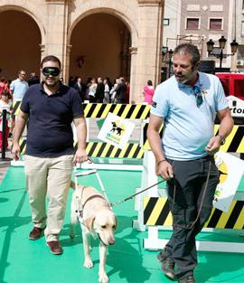 Excelente labor de los perros guía en la movilidad de las personas ciegas