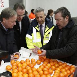 2.500 toneladas de clementinas con destino a EEUU desde PortCastelló
