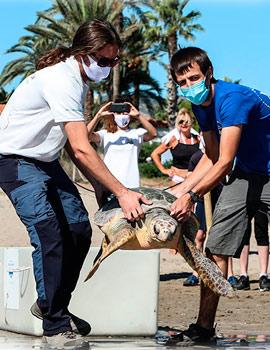 Jornada de limpieza y suelta de una tortuga en la playa del Serradal