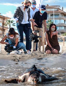 La Fundación Oceanogràfic suelta 20 tortugas marinas del nido de Castelló